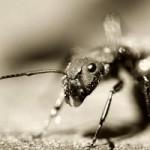 Karınca zombiler !