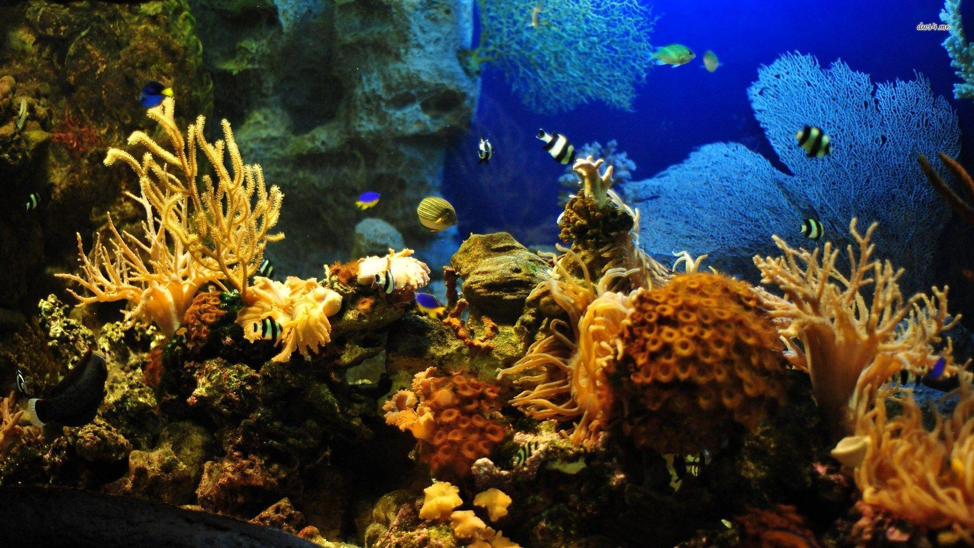 tropical, wallpaper, animal, aquarium, fish, resimleri, akvaryum