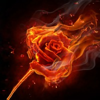 yanan-gül