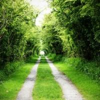 yeşil-yol